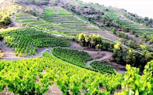 10 Priorat _ Nic lai _ Flickr_files