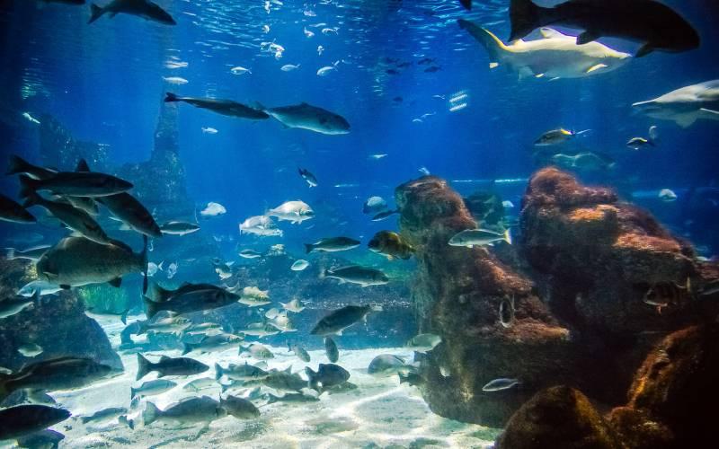 2 L'Aquàrium de Barcelona. _ foto Andrey Salikov (2)