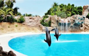 3 Visita Loro Parque - Tenerife. _ Fotografía Edante Tenerife (2)