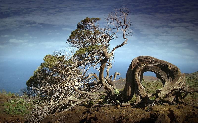 El Hierro, sabinar 1 _ Mas imagenes de El Hierro y los rodaj… _ Flickr foto Angel Febrero_files