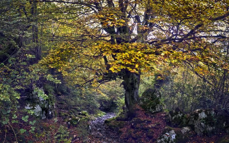 Picos de Europa National Park Por la Senda del Arcediano_ On the Arcediano path, Picos d… _ Flickr foto Jose Antonio