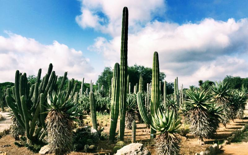 Botanicactus, Mallorca _ foto Oxana Volkova _ Flickr